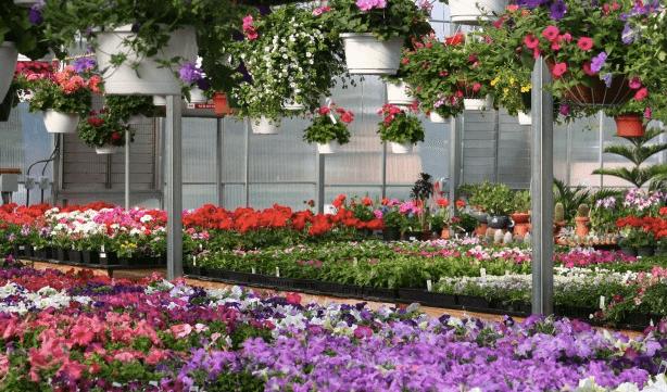 mcnaughtons-gardens