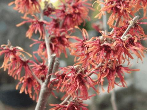 ambleside-gardens