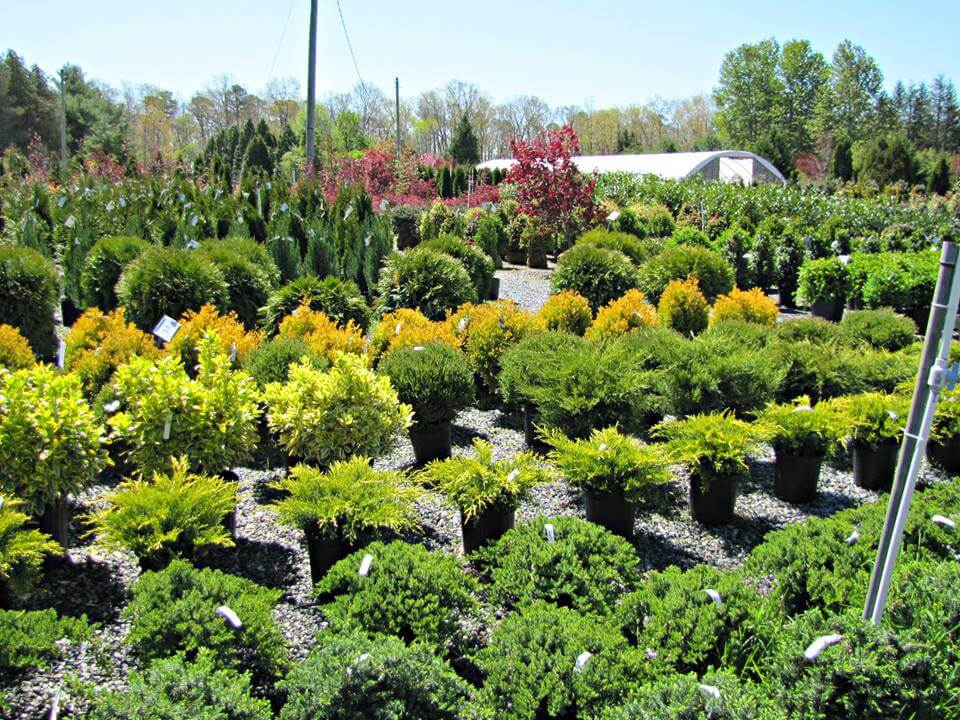 Atlantic Nursery