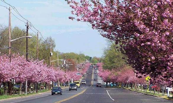cherry-hill-charming-new-jersey